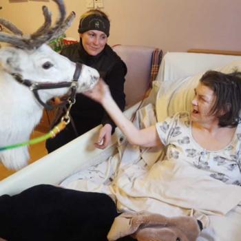 Avalon resident Sandra Humpfryes feeds Winter the reindeer