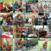 Hartford Care Group CHODV2 2018 Collage